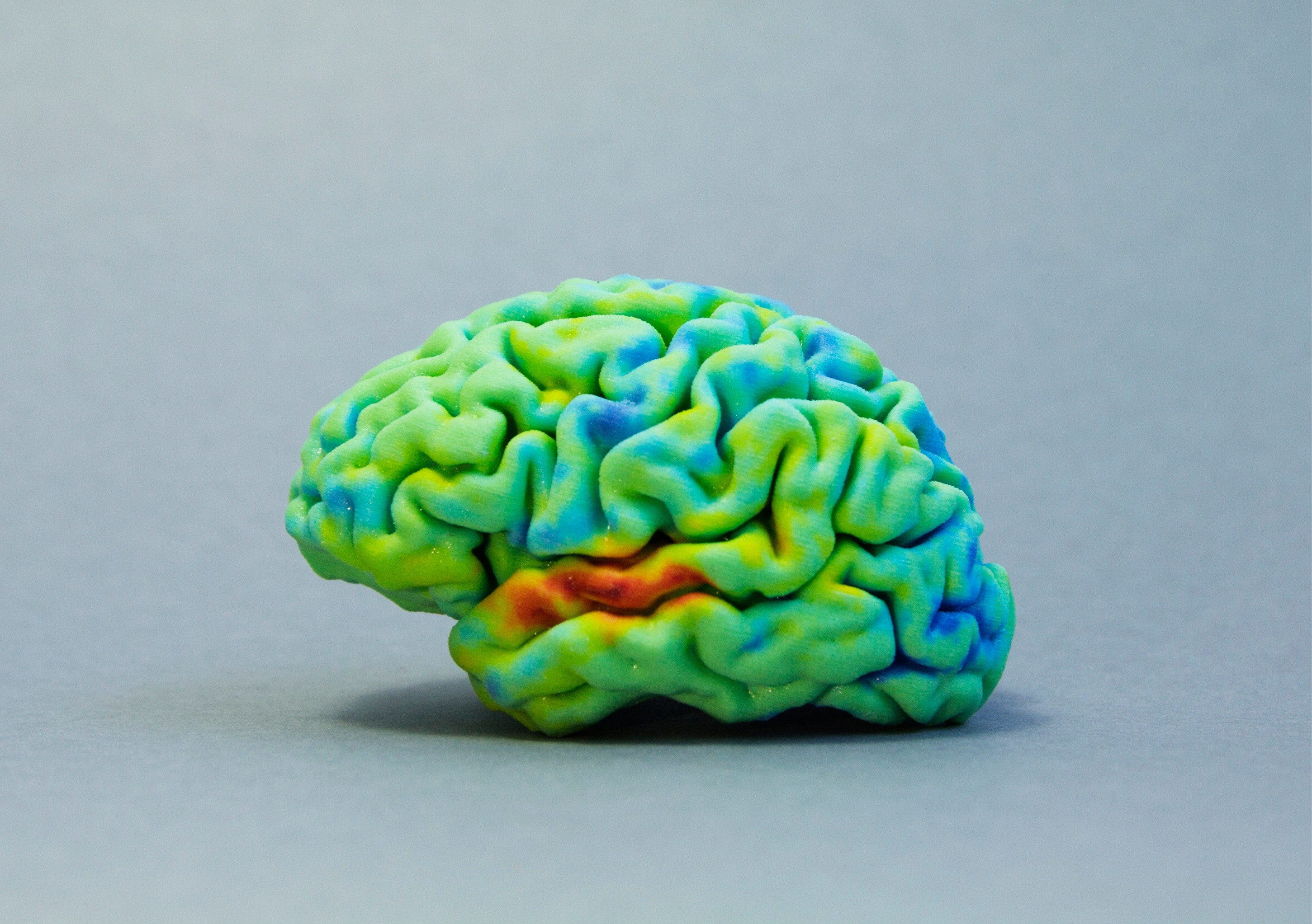 Discover the tutorial on how to 3D print your own brain!