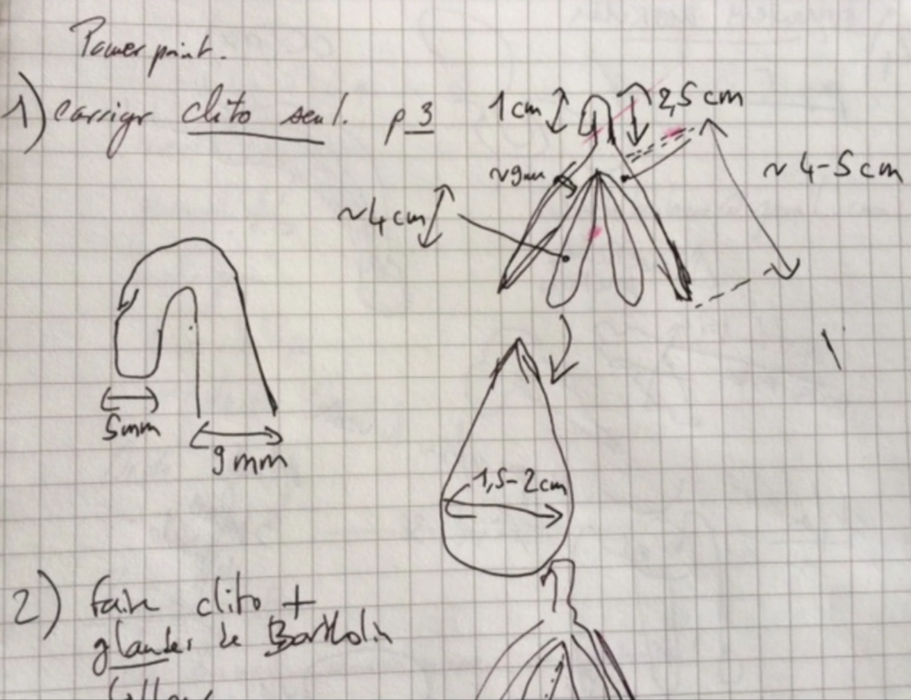 sketch 3D clitoris 3D printed