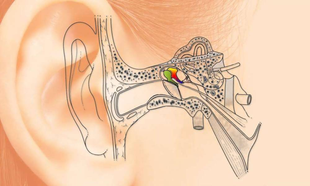 How to use 3D printing to cure deafness?