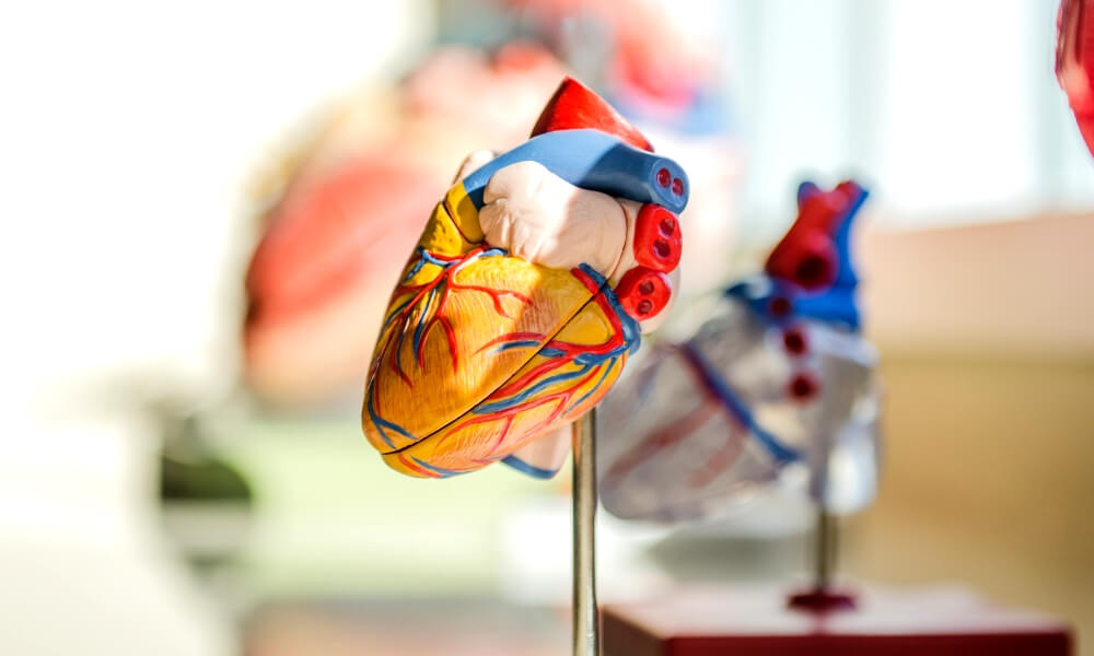 The most promising 3D printed organs projects